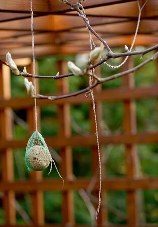 food for titmouse hanging on branches against the background of a garden gazebo