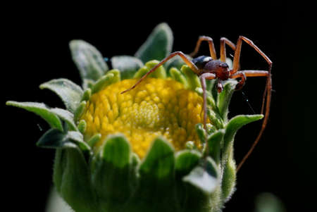 a small spider on a flower bud in the garden Stock Photo