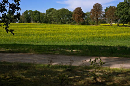 rape field against the clear blue sky in the countryside Banco de Imagens
