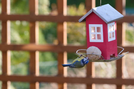blue tit on a feeder filled with grain