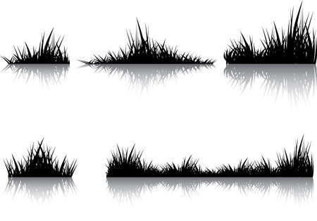 conducted: Silhouettes of grass with the reflection. Illustration conducted was used as the dummies for your composition. Illustration