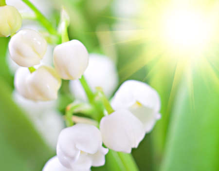 lily of the valley, lights shining sun