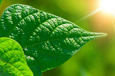 Leaves of plants illuminated the sun Stock Photo