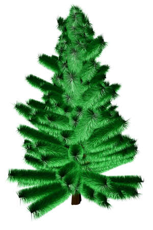 beautiful fir on a white background Stock Photo - 5814594