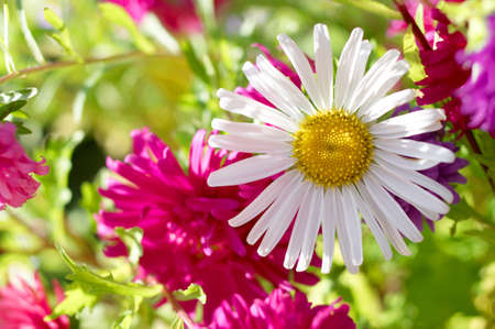 beautiful decorative flowers in the flowering period
