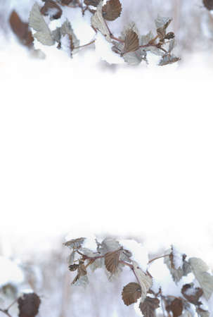 specificity: Photo background with details of nature in winter. There is absolutely white area for your text. Stock Photo