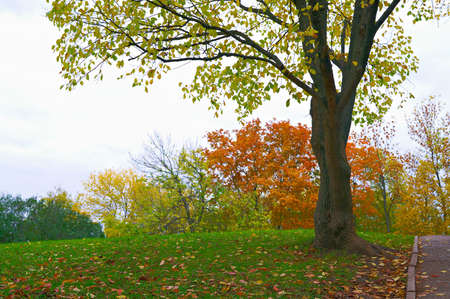 autumn landscape with beautiful trees, the leaves have changed color Stock Photo - 6691178