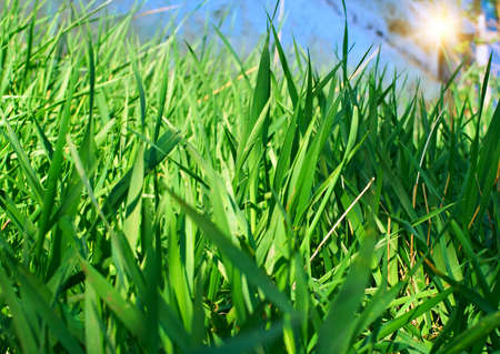 specificity: Green grass close up. Beautiful natural background.