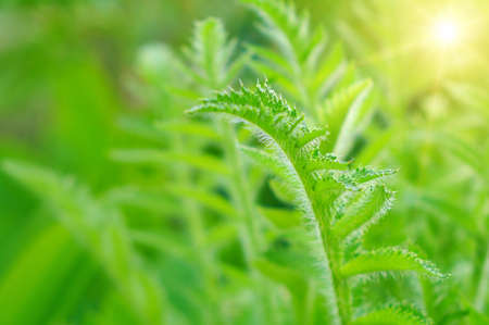 specificity: green leaves of plants during the summer period Stock Photo