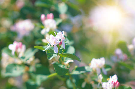 specificity: Jasmine flowers. Nice background on the subject of seasonal differences.