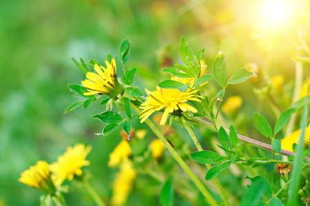 specificity: Conceptual image with a yellow field flowers and bright rays of light. Shallow DOF.