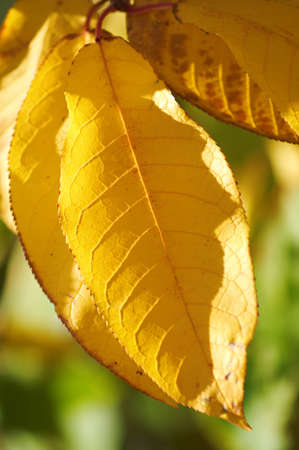 specificity: Yellow leaves on the trees in autumn. Very beautiful, natural colors.