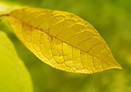 specificity: Yellowing leaves of the tree indicate the change of the season. Autumn came and colors in nature change.