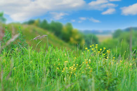 green grass against the blue sky. nice background Stock Photo