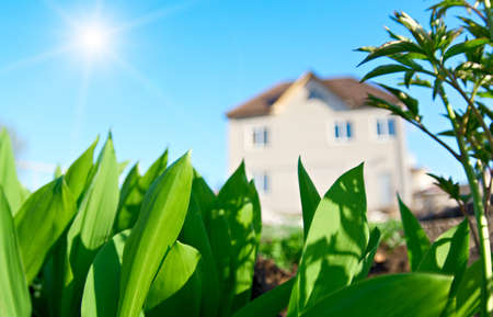 specificity: Beautiful landscape with a cottage. Clear summer weather. A very positive mood. Shallow DOF (on the left leaves) Stock Photo