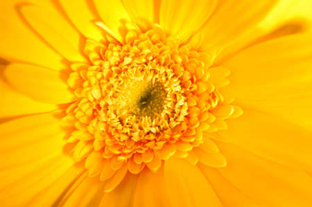 Gerber closeup. Bright flowers, symbolizing the colors of summer. Stock Photo