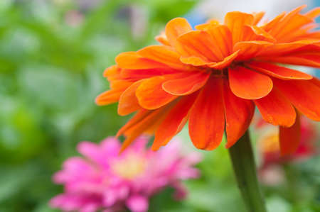 specificity: Beautiful bright flowers close up. The positive picture of the summer months.