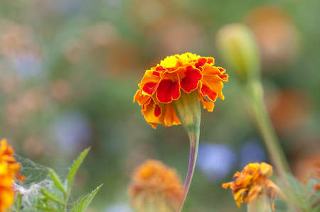 Bright orange flowers. Beautiful photography on the theme of summer.