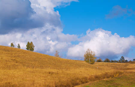 Picturesque autumn landscape with a field and trees