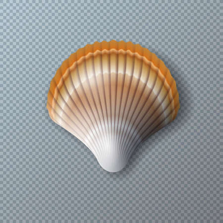 Vector Illustration with Beautiful Shell Isolated on Transparent Background. Vector Nature Sea Design Elemets with Realistic Marine Mollusk Seashell for Banner, Flyer, Invitation, Brochure, Party Poster or Greeting Card.
