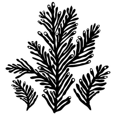 Monochrome stylised silhouette of sea koral isolated on white background. Black ink hand drawn graphic. Element for design baby fabrics, wrapping paper, printing on clothes, covers books, postcards 向量圖像