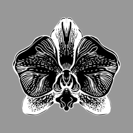 Orchid flower isolated oh white bacground. Black and white manual graphic. Hand drawn element for design, printing, textile, gift packade, wrapping paper, greeting card, invitation card.