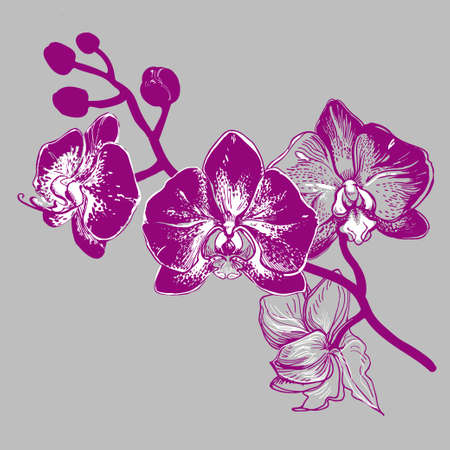 Hand drawn flowers Orchid sketch isolated. Monochrome manual graphic on grey background. Element for design printing, wrapping paper, greeting card, invitation card for wedding.
