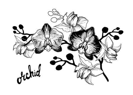 Black and white hand drawn sketch with spotty orchids flowers on white background and brush pen lettering calligraphy phrase. Can be used for printing on wrapping paper, greeting card, postcard.