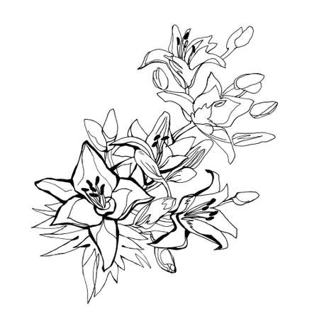 Black and white outline bouquet of lily flowers isolated on white. Hand-drawn floral element for greeting card, invitation of wedding, birthday, Valentine's Day, mother's day and other holidays.