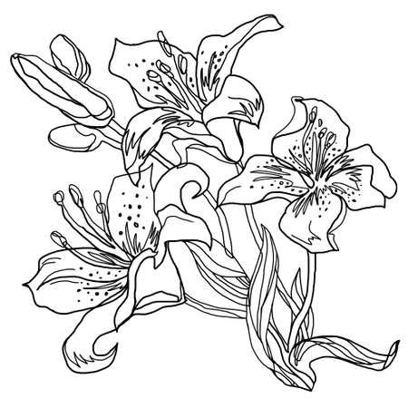 Lily flowers outline sketch drawn by hand isolated on white. Black and white freehand floral element for greeting card, invitation of wedding, birthday, Valentines Day, mother's day, other holiday.
