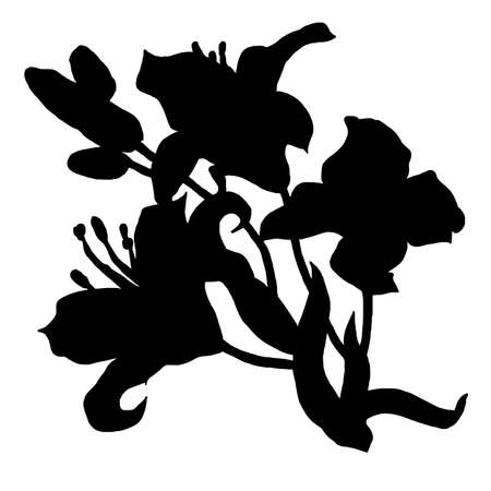 Black silhouette of lily flowers sketch drawn by hand isolated on white. Black and white freehand floral element for greeting card, invitation of wedding, birthday, textile, package, mothers day.
