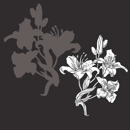 Silhouettes of lily flowers sketch drawn by hand isolated on black. Set of black and white freehand floral elements for greeting card, invitation of wedding, birthday, textile, package, mothers day.