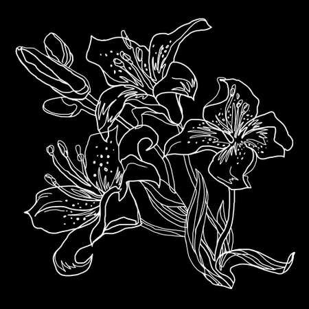 Lily flowers, white outline hand drawn bouquet isolated on black. Black and white freehand floral element for greeting card, invitation of wedding, birthday, mothers day, other holidays. Banque d'images