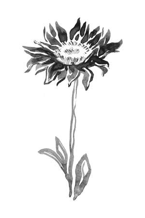 Inflorescence, stem and leaves of Flower Chrysanthemum isolated on white. Halftone watercolor freehand sketch. Monochrome hand drawn element for floral design, created hand made greeting card, poster.