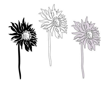 Set of flowers and stems of Chrysanthemum isolated on white. Vector freehand sketch. Monochrome hand drawn element for floral design, created hand made greeting card, poster, package.