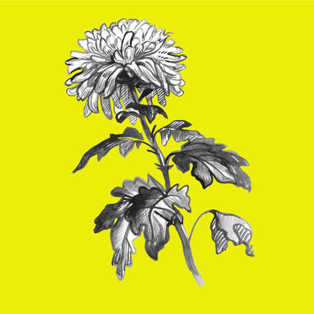 Realistic ink strokes sketch of Chrysanthemum flower, stem, leaves in gray halftones. isolated on yellow. Monochrome freehand floral design element for created greeting card, poster, package. Banque d'images