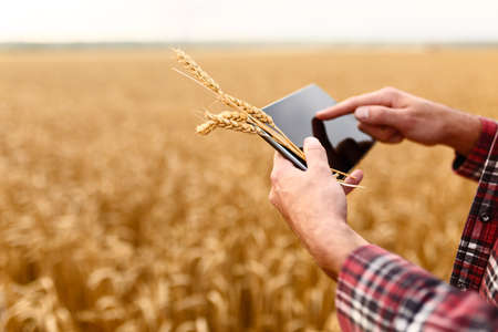 Smart farming using modern technologies in agriculture. Man agronomist farmer with digital tablet computer in wheat field using apps and internet, selective focus Фото со стока
