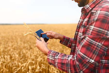 Cultivo inteligente utilizando tecnologías modernas en la agricultura. Granjero agrónomo hombre con tableta digital en el campo de trigo con aplicaciones e internet, enfoque selectivo Foto de archivo