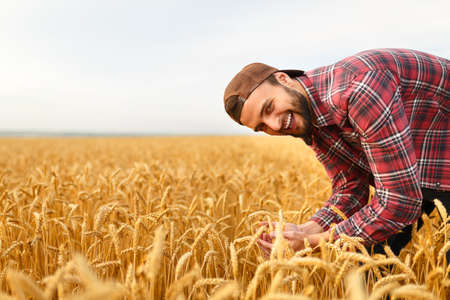 agronomist: Smiling bearded man holding ears of wheat on a background a wheat field. Happy agronomist farmer cares about his crop for the rich harvest on sunset Stock Photo