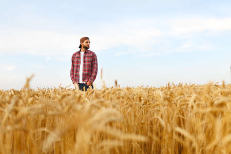 stilish: Portrait of a bearded farmer standing in a wheat field. Stilish hipster man with trucker hat and checkered shirt on. Agricultural worker Stock Photo