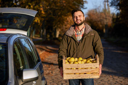 Man with wooden box of yellow ripe golden apples at the orchard farm loads it to his car trunk. Grower harvesting in the garden is holding organic apple crate. Harvest Concept. Housewifely male bought fruits. Stock Photo
