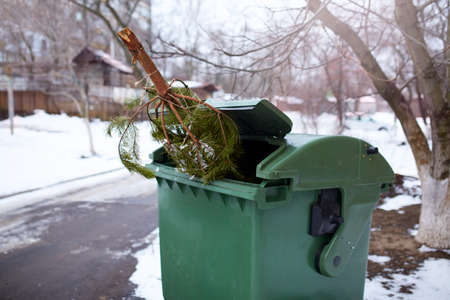 End of Christmas. Used and abandoned cutted fir tree in garbage bin waits for collection by by garbage truck. Irresponsible behavior towards nature, save forest, keep green concept. Deforestation ban