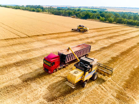 Aerial drone view. Overloading grain from combine harvesters into grain truck in field. Harvester unloder pouring harvested wheat into a box body. Farmers at work. Agriculture harvesting season. Standard-Bild