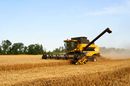 Combine harvester working in wheat field with clear blue sky. Harvesting machine driver cutting crop in a farmland. Agriculture theme, harvesting season. Imagens