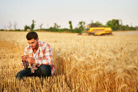 Agronomist examining cereal crop before harvesting sitting in golden field. Smiling farmer holding a bunch of ripe cultivated wheat ears in hands. Harvester combine on background. Organic farming.