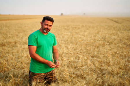 Agronomist examining cereal crop before harvesting sitting in golden field. Smiling farmer holding a bunch of ripe cultivated wheat ears in hands. Rancher at work. Organic farming concept. Archivio Fotografico