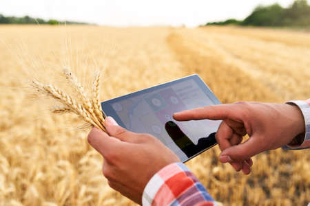 Precision farming. Farmer hands holding tablet using online data management software with maps at wheat field. Agronomist working with touch computer screen to control and analyse agriculture business