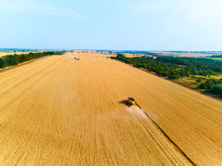Aerial drone view: combine harvesters working in wheat field on sunset round about. Harvesting machine driver cutting crop in farmland in dusk. Organic farming. Agriculture theme, harvesting season. Фото со стока