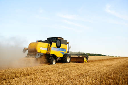 Combine harvester working in wheat field with clear blue sky. Harvesting machine driver cutting crop in a farmland. Agriculture theme, harvesting season.