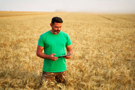 Precision farming. Farmer holding tablet pc, using online data management software at wheat field. Agronomist working with touch computer screen, control, analyse agriculture business. Innovative tech